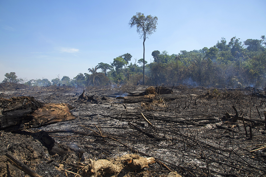 Păduri arse în apropiere de orașul Novo Progresso, Brazilia