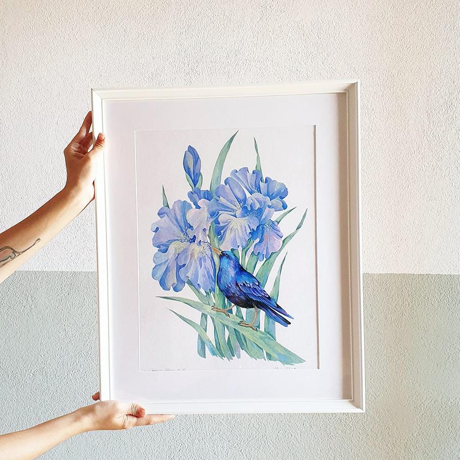 Alexia Udriște - tablou graur