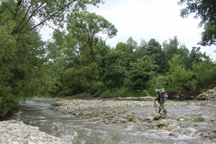 Păduri ripariene pe malul râului Gilort. Foto: Fish for Life