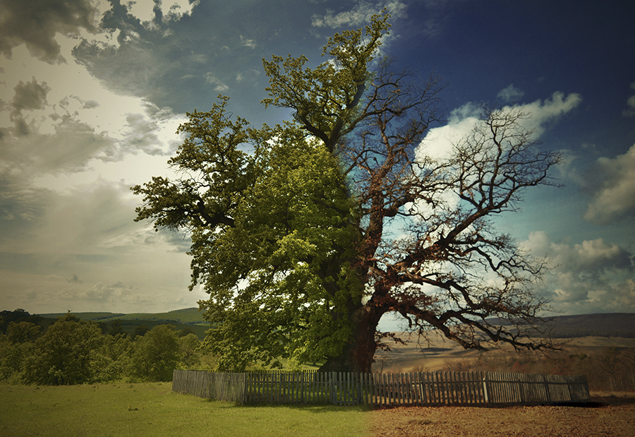 Mindcraftstories_ Stejar-Arbori batrani-Conservare-Ecosistem_04_Elis Serenity - fotodream.ro