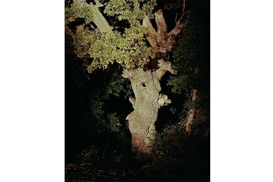 Mindcraftstories_Stejarul lui Ivancenco-Letea-Arbori batrani-Conservare-Ecosistem_02_Florin Ghenade