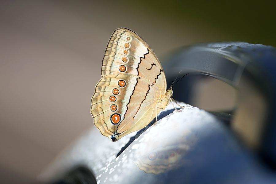 https://mindcraftstories.ro/images/2021/06/Mindcraftstories_fluturi-biodiversitate-importanta-ecosistemelor-ecologie-urbana_03_Richard-McManus-Getty-Images.jpg