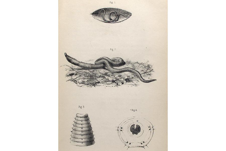 Mindcraftstories_Ramele-Ecosistem-Biodiversitate-Fertilizatori naturali-My Antipa_02_New York Public Library Digital Collections