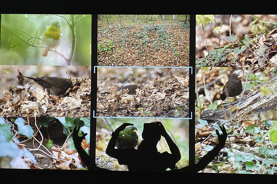 https://mindcraftstories.ro/images/2021/09/Mindcraftstories_Romania-Salbatica-Documentar-natura-Wildlife-Dan-Dinu-Cosmin-Dumitrache-TIFF_14_Dan-Dinu.jpg