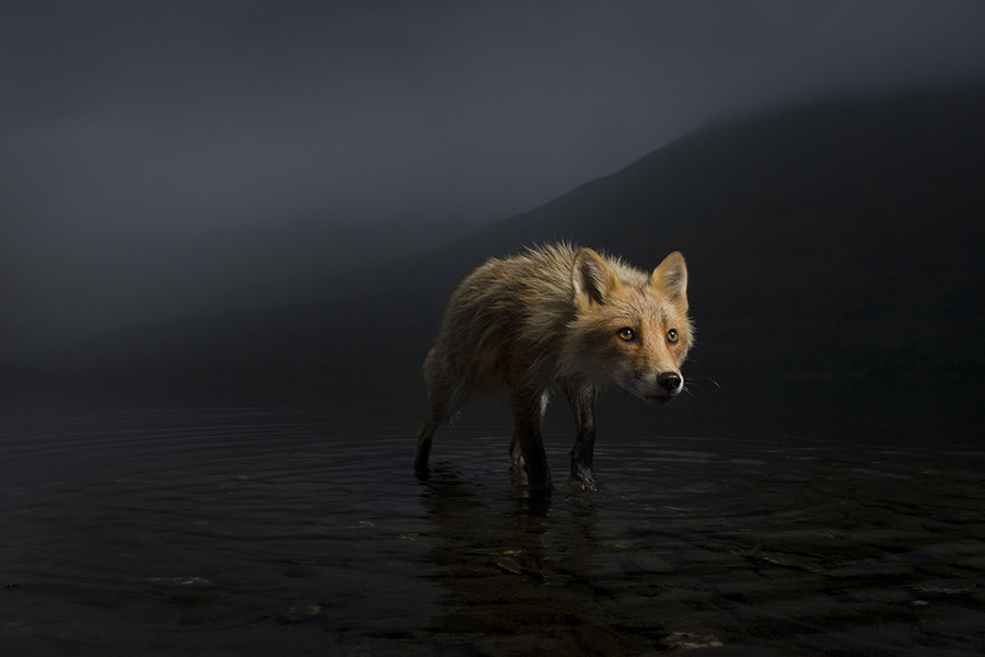 Mindcraftstories_Wildlife_Photographer Of The Year 2021 competition-Gheorghe Popa_Jonny Armstrong