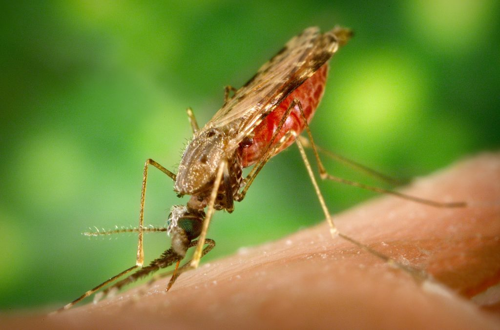 vaccin antimalarie