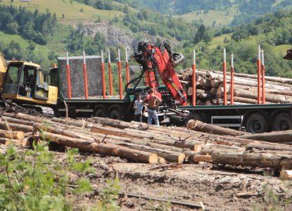 Investigațiile sub acoperire ale celor care se luptă cu mafia lemnului