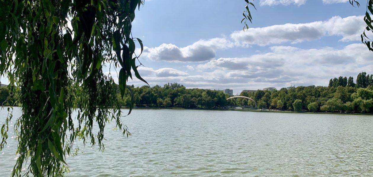 Dovedit științific: parcurile ne ajută să ne calmăm (inclusiv pe social media)