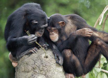 5 descoperiri recente despre inteligența animalelor