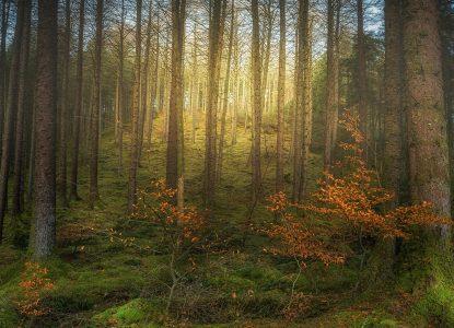 5 lucruri inteligente pe care le fac copacii