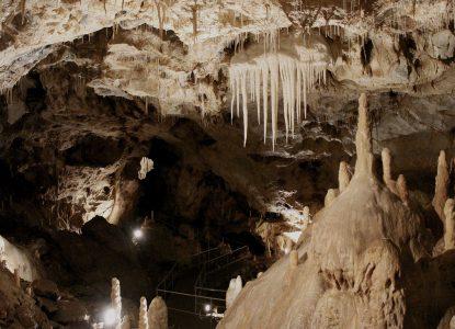 A dispărut un gândăcel din Peștera Urșilor