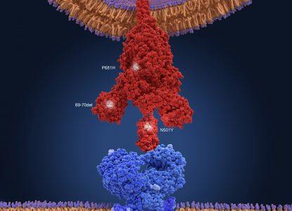 Coronavirus Science Report #55: Efectul noilor tulpini asupra vaccinurilor