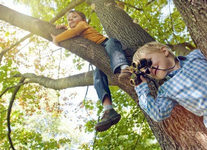 Cum să faci birdwatching în orașe