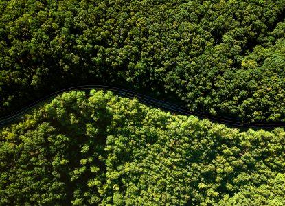 Salvăm păduri sau plantăm copaci?