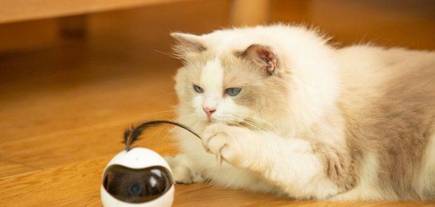 Ebo – robotul inteligent care se joacă cu pisica ta când nu ești acasă