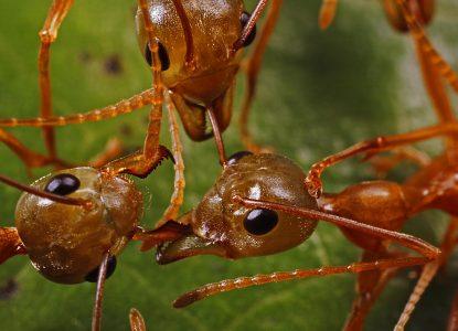Despre furnici, oameni și lecțiile războiului